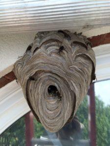 Chestatee Hornet Nest Removal