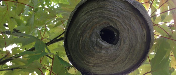 bald faced hornet nest johns creek