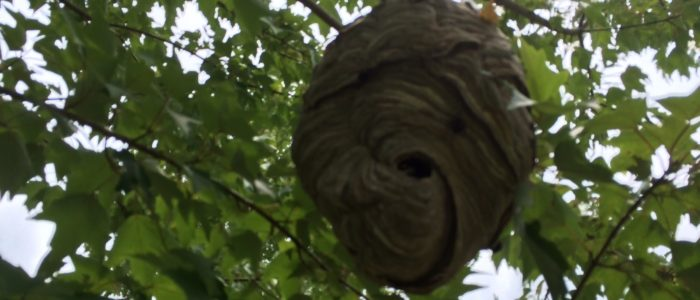 hornet nest removal johns creek