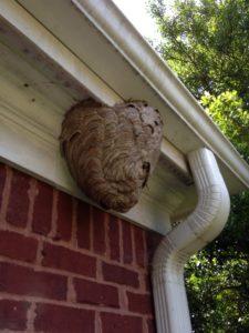 suwanee hive removal