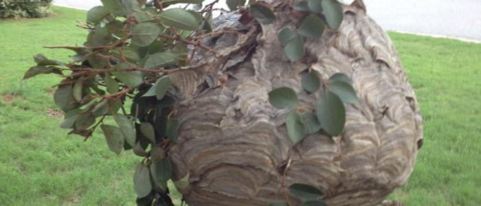 hornet nest johns creek