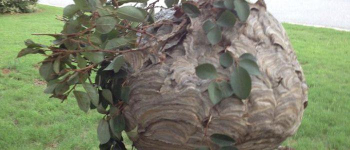 hornet nest johns creek